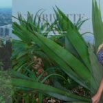 Charlotte Withrow - Playboy Australia